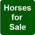 Horses for Sale - Dragon Driving